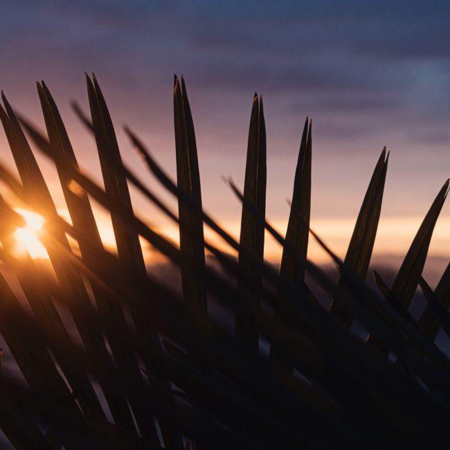 Chill-Sunrise-SplitShire-05009_7_60